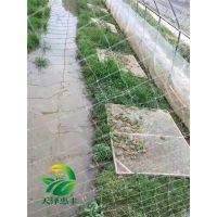 湖北天泽惠丰生态农业发展有限公司=哪里有青蛙养殖基地
