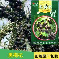 纯野生黑枸杞子种子 黑果枸杞种子 多年生菜园阳台盆栽黑枸杞种子