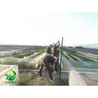 湖北天泽惠丰生态农业发展有限公司-青蛙养殖的一些经验