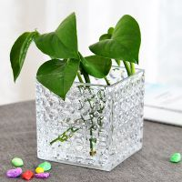 正方形水培玻璃器皿睡莲方缸绿萝透明铜钱草水培花盆玻璃花瓶