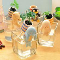 吸水可爱盆栽迷你水培植物办公室桌面小创意摆件儿童DIY种植礼品