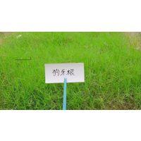 铜仁边坡绿化常用的草籽狗牙根黑麦草高羊茅多少钱