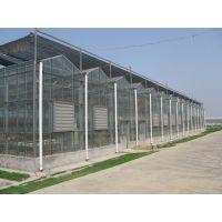 玻璃温室无土栽培图片/内蒙古无土栽培温室种植