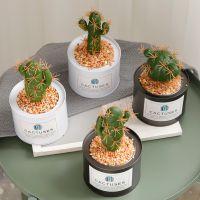 北欧ins仿真植物装饰品绿植室内盆栽仙人掌铁艺摆件假草摆设盆景