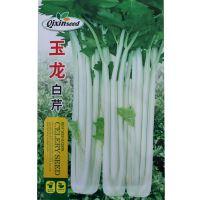 aa玉龙白芹种子 白杆芹菜籽  蔬菜种子批发 特色白玉保健特色蔬菜