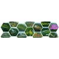 山东设计公司-农旅规划设计,我们更专业!致力打造农旅规划设计典范品牌 专注现代循环农业规划,创新农旅