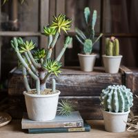 定做仿真系列盆景盆栽仙人掌装饰摆件仙人柱仙人球小众品种