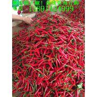 急售新鲜朝天椒-本厂现有2000吨朝天椒尾期货价格优惠