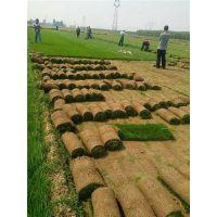 内蒙草皮种植|洛阳草坪出售|人工草皮