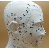 伟叶头部针灸穴位模型超大47厘米高清经络穴位脑袋面脸部按摩刮痧