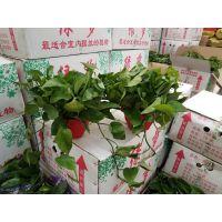 北京卖圆叶子招财的花卉绿植