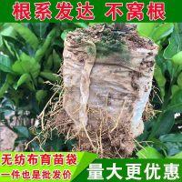 无纺布育苗袋(轻基质育苗网袋)使用及介绍
