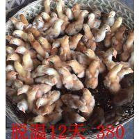 湖北省襄阳鸡苗批发养殖基地出售鸡鸭鹅苗