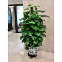 北京花卉租赁北京绿植租摆公司
