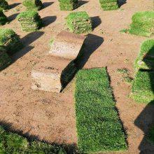 马尼拉草皮 江西新余草坪种植批发价格 采购价格