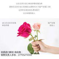 进口鲜花批发进口玫瑰厄瓜多尔进口鲜花供应商进口绣球,进口鲜花供应商,上海进口鲜花批发供应链,优质进口