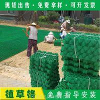 山东优质HDPE植草格厂家 草坪格 停车场小区绿化带专用砖
