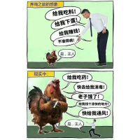 听人劝吃饱饭,就因听了别人一句话用上了增蛋素改变了蛋鸡产蛋量