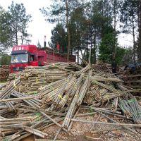 大量批发2米粗竹竿 树木支撑杆绿化支撑杆 京西出品 江西发货