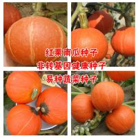 京福种业西洋小南瓜红栗王南瓜种子蔬菜阳台种植盆栽菜籽露地栽培