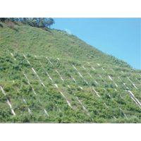 高速边坡植草专用绿化草籽昭通市当天发货