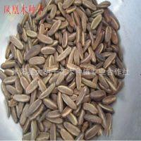 优质林木种子批发 凤凰木种子 颗粒饱满 绿化苗木种子