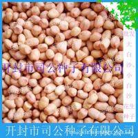 批发其他农作物种子、种苗 小白沙花生 手剥花生米 花生芽苗菜