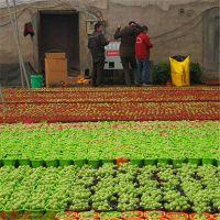 植物养殖育苗采暖环保改造全套方案 全自动燃气加热炉