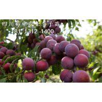 四川易申甜樱桃有限公司