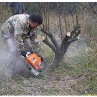 源头厂家特价直销快速铲式起树机 带土球汽油断根移苗机