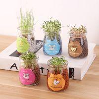 创意办公室DIY负离子草娃娃 迷你桌面植物摆件水培小草盆栽礼品