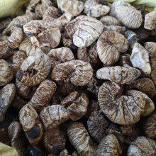 豆虫功效与作用 芝麻虫产地批发价格哪里购买 多少钱一公斤
