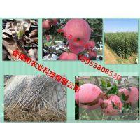 壹棵树农业 苹果树苗哪种好 苹果树种苗批发 品种齐全