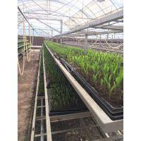 全国营养土 腐殖土 种植土 有机肥 屋顶轻质土 花卉土生产厂家批发直供