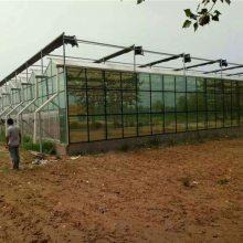 阳光板温室较玻璃温室的优势有哪些?