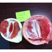 兴红盛三红蜜柚苗 优质三红蜜柚苗多少钱一株
