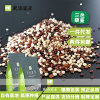 三色藜麦米 精装批发分销微供代发包邮进口品质基地自种纯正黎麦