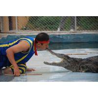 资深鳄鱼表演团队 海狮表演出租 马戏团活动