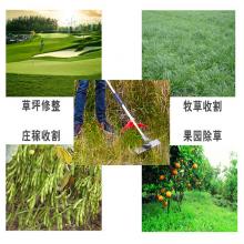 背负式四冲灌木杂草清理割草机 农用多功能除草机 小型松土机