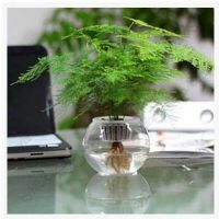 苗盆栽花卉大苗客厅室内小盆栽绿植水培四季常青植物文竹