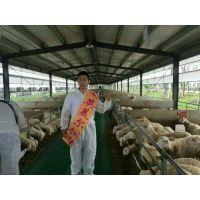 农村圈养的羊怎么才能肥///圈养羊育肥