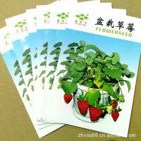 植物种子 草莓种子 盆栽草莓 四季都可以种 50粒 特价销售