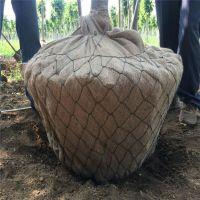 力争全国市场特低价树根网,苗木移植网,包土球铁丝网