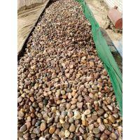 商丘出售天然鹅卵石/变压器鹅卵石/水处理鹅卵石滤料哪家好
