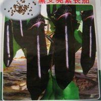 批发蔬菜种子黑又亮紫茄子种子-(10克装)-盆栽蔬菜种子花卉种子