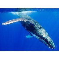 鲸喜派系统开发手段