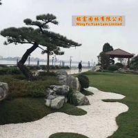 江北公园泰山石点缀 草坪点缀泰山石批发 松树下的雪浪石景观