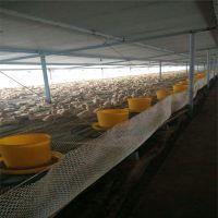 肉鸭养殖塑料平网 射阳县塑料平网 信阳养殖网