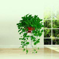 福田办公室租花公司,如何装饰绿化办公室环境,大型发财树租赁