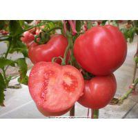 番茄种植用什么肥 西红柿种植用肥时间